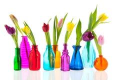 Färgrika tulpan i glass vases Fotografering för Bildbyråer