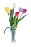 Färgrika tulpan i vasen som isoleras på vit Royaltyfria Foton