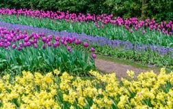 Färgrika tulpan på Keukenhofen, Nederländerna Royaltyfri Fotografi