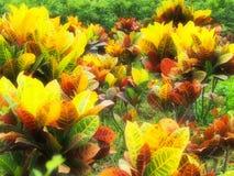 färgrika växter Arkivfoton