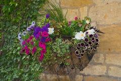 Färgrika växter i väggkorg Royaltyfri Bild