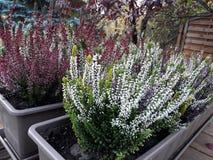 Färgrika växter som smyckar gatorna royaltyfri bild