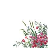 Färgrika vårblommor och gräs på en äng Royaltyfri Fotografi