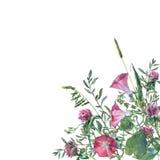 Färgrika vårblommor och gräs på en äng Fotografering för Bildbyråer
