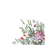 Färgrika vårblommor och gräs på en äng Royaltyfri Foto