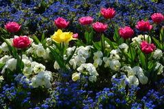 Färgrika vårblommor - unik Arkivfoto