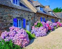 Färgrika vanliga hortensior blommar i en liten by, Brittany, Frankrike Fotografering för Bildbyråer
