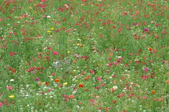 färgrika vildblommar Arkivfoton