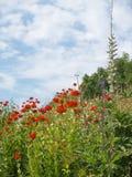 färgrika vildblommar Royaltyfri Fotografi