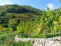 färgrika vingårdar Royaltyfria Bilder