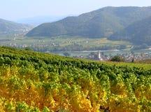färgrika vingårdar Arkivbilder