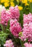 Färgrika vinterblommor royaltyfri fotografi