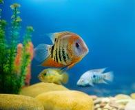 färgrikt akvarium Arkivbilder