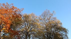 Färgrikt Autumn Leaves With Clear Blue himmel- och morgonljus arkivfoto