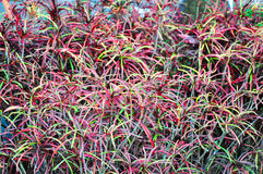 Färgrikt av blomma Arkivfoto