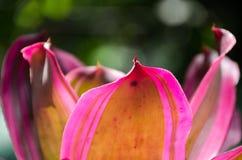 Färgrikt av bromeliaträdgård Arkivbilder