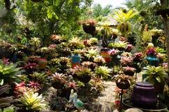 Färgrikt av bromeliaträdgård Royaltyfri Bild