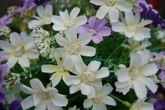 Färgrikt av den konstgjorda blomman för torkduk, slut upp Royaltyfri Foto