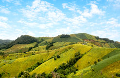 Färgrikt av fältsojabönabönor på berget arkivfoton
