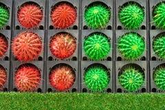 Färgrikt av kaktuns arkivfoto