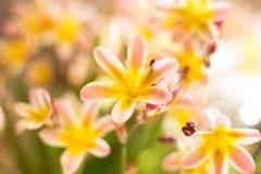 färgrikt blom- för abstrakt bakgrund Arkivbilder
