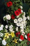 färgrikt blom- för bakgrund Arkivfoton