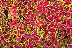 färgrikt blom- för bakgrund Royaltyfria Bilder