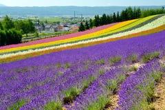 Färgrikt blommafält, Hokkaido, Japan royaltyfri bild