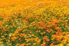 Färgrikt blommafält i sommar, Hokkaido Japan Arkivfoton