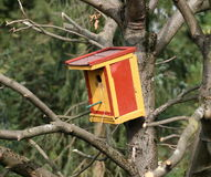 färgrikt bygga bo för ask Arkivfoton