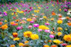 Färgrikt eteriskt fält av blommor fotografering för bildbyråer