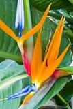färgrikt exotiskt blom- för blom Arkivfoton