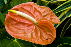 färgrikt exotiskt blom- för blom Royaltyfri Foto