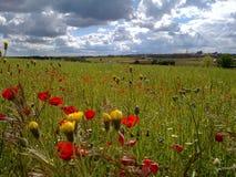 färgrikt fält Royaltyfri Fotografi