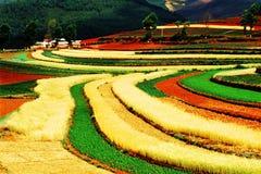 färgrikt fält för höst Royaltyfri Fotografi