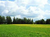 Färgrikt fält i sommar, Litauen royaltyfri bild