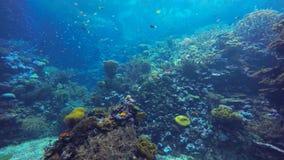Färgrikt fiskbad vid en korallrev stock video
