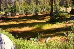 färgrikt gräs Arkivbilder