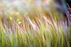 färgrikt gräs för bakgrund Royaltyfri Foto