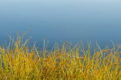 Färgrikt gräs vid en sjö Arkivbild