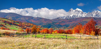 Färgrikt höstlandskap i berg Royaltyfri Fotografi
