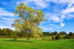 Färgrikt höstlandskap med trädet och blå himmel Royaltyfria Bilder