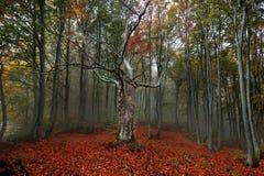 Färgrikt höstskoglandskap arkivbild