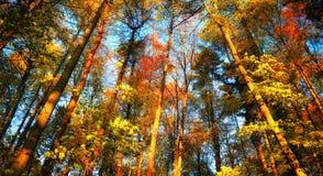 Färgrikt höstskoglandskap royaltyfria foton