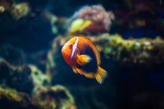 färgrikt hav Hav Marin- djur Fisk Royaltyfri Fotografi