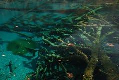 färgrikt jiuzhaivatten för härligt porslin royaltyfria bilder