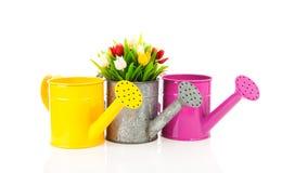 färgrikt kan bevattna för tre tulpan Arkivfoton