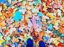 Färgrikt lämnar Arkivfoto