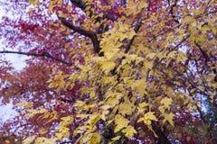 Färgrikt lämnar, trees, lawn, Etc royaltyfri foto