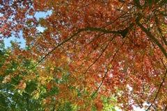 Färgrikt lämnar, trees, lawn, Etc Fotografering för Bildbyråer
